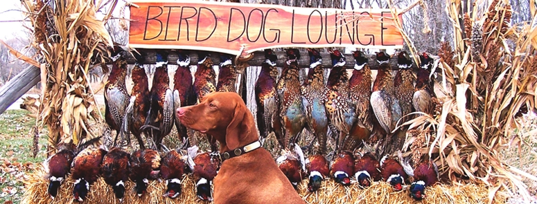 Luna posing with pheasant after a morning hunt at The Bird Dog Lounge and the Wagon Wheel Ranch are located near Kimball, in eastern South Dakota. This area is famous for incredible numbers of beautiful South Dakota wild pheasants. We think it is the pheasant hunting capital of the world.